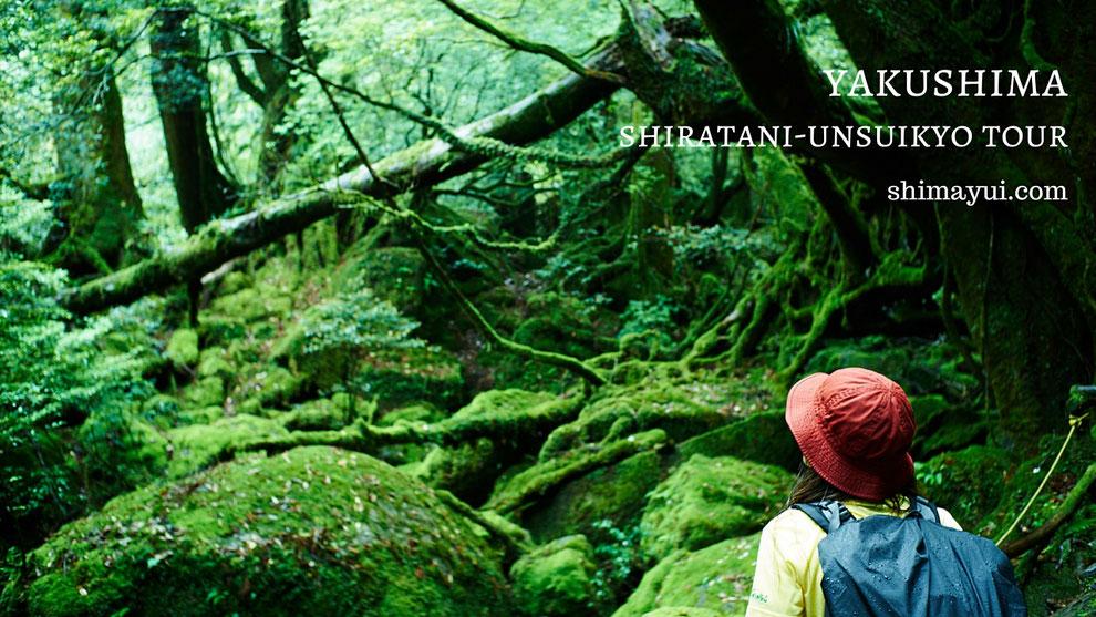 苔の広がる、もののけ姫の森で(白谷雲水峡ガイドツアーにて)。
