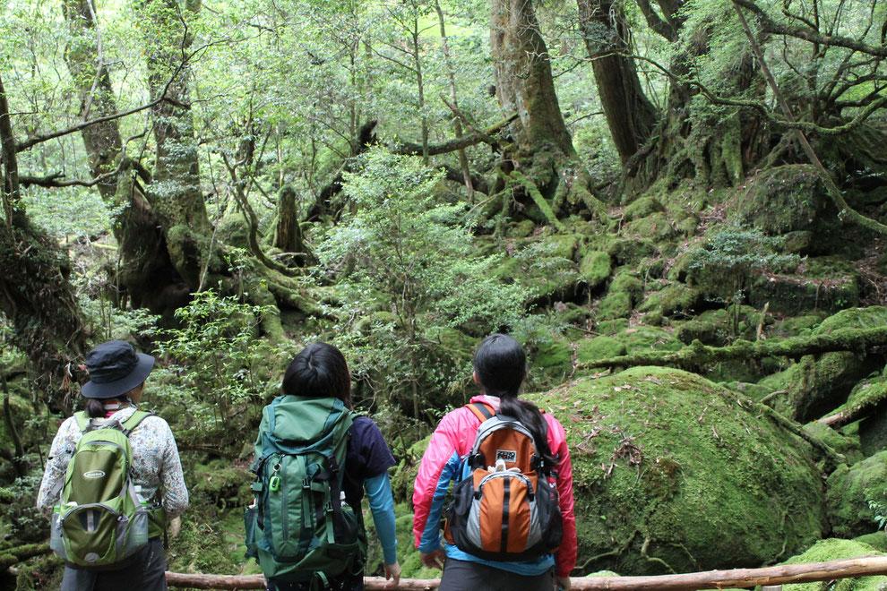 苔むす森(もののけの森)に見惚れる(白谷雲水峡ガイドツアーにて)
