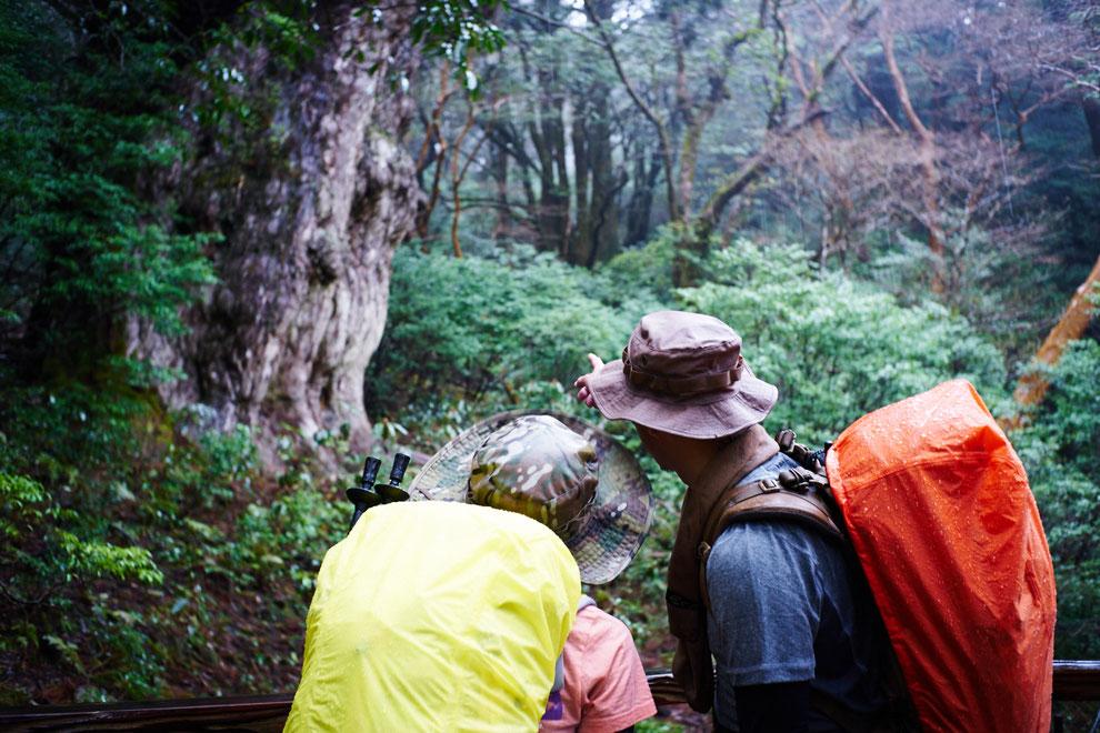 屋久杉・縄文杉と念願のご対面。歩いて見た人にしかわからない感動があります。