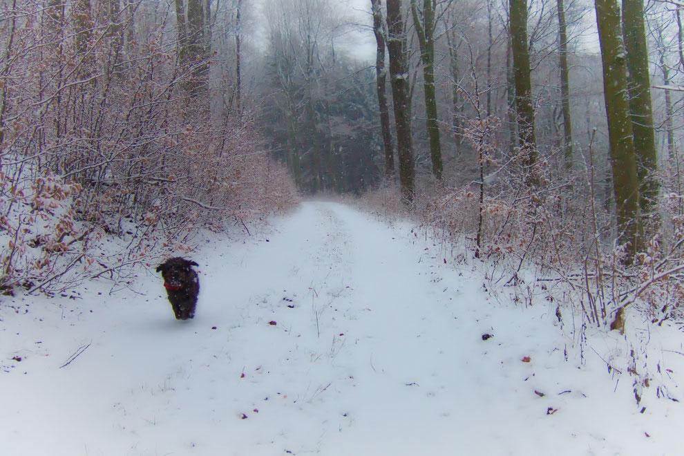 Toben durch den Winterwald - hier auf dem Weg direkt an den Häusern am Wald