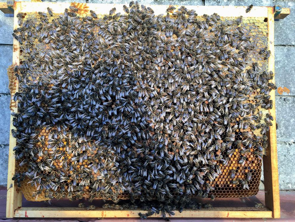 Bienenwabe im Oktober
