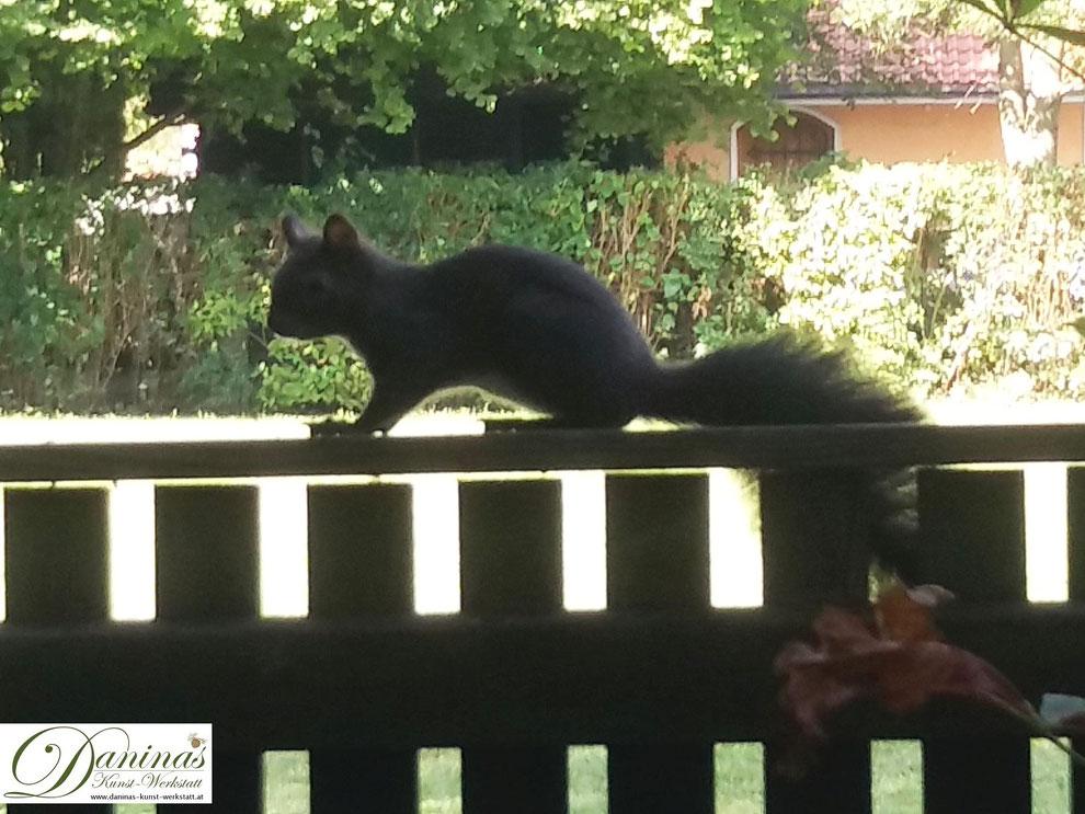 Eichhörnchen im Garten