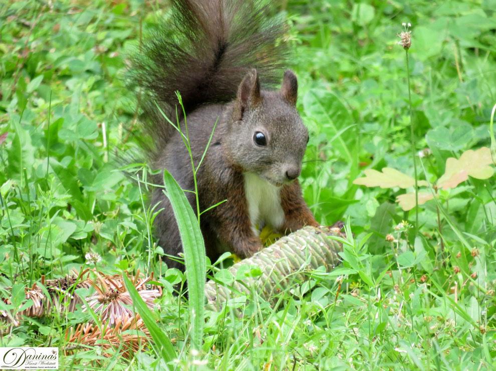 Entzückendes Eichhörnchen mit leckerem Fichtenzapfen