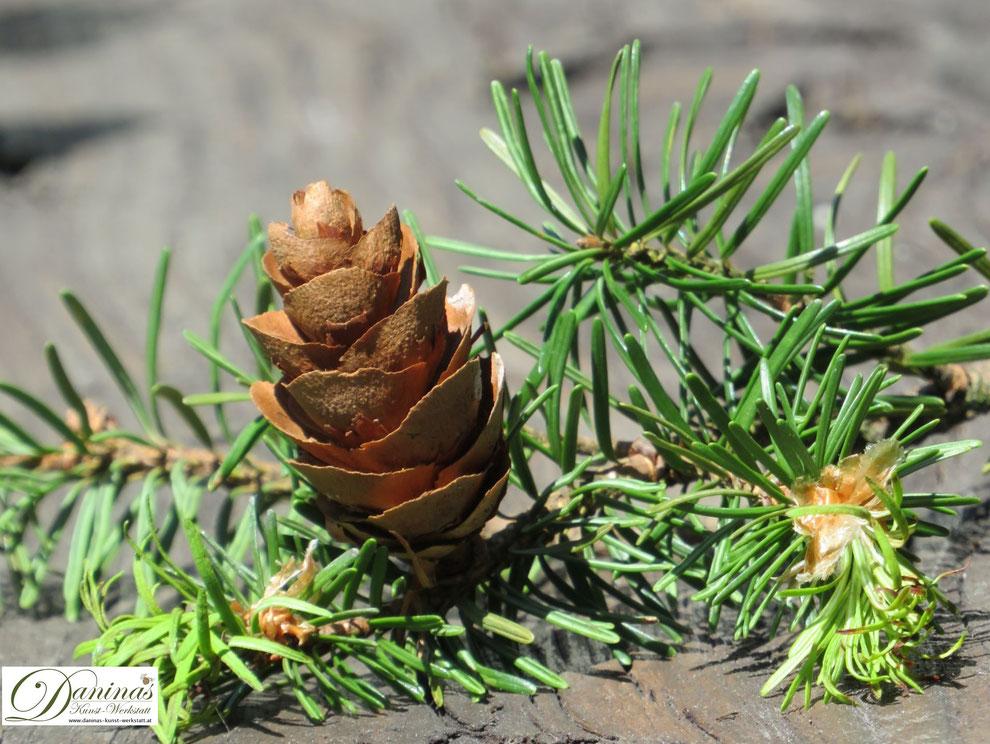 Im Herbst einen Waldspaziergang machen und Naturmaterialien wie Zapfen, Bucheckern, Hagebutten und bunte Blätter sammeln und damit eine Herbst Dekoration selber machen.