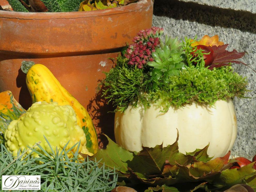 Natürliche Herbstdeko für draussen mit weißem Kürbis, Moos, Hauswurz und Fetthenne