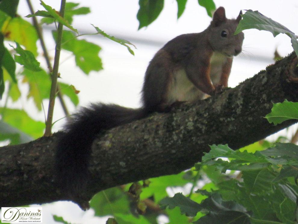 Eichhörnchen mit Pilzen. Herbstzeit.