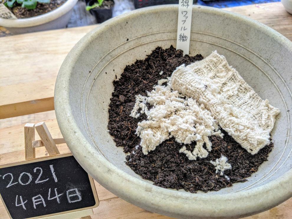 Tsumugu つむぐ オーガニックコットン 分解 洗うArau わめん スキンケア アトピー 高品質 プレミアム 安全 貧困 なくそう ふわふわ SDGs 油分 水分 弾力 えひめAI 土づくり かゆい 土に還す 実験 乾く 環境 サスティナブル 赤ちゃん 土 米ぬか 持続可能な開発目標  肌 石けん 肥料 泡 エスディジーズ かゆみ ぼかし 乾燥 毛穴 取組み 地球 刺激 健康 課題 世界 皮膚 栽培 水分 守る パートナーシップ 優しい 気候変動 目標 気持ちいい 肌触り未来 堆肥 農家 農業 良い