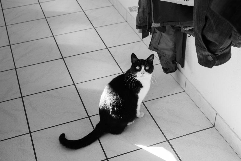 Mimine est très perturbée par notre présence constante en revanche !