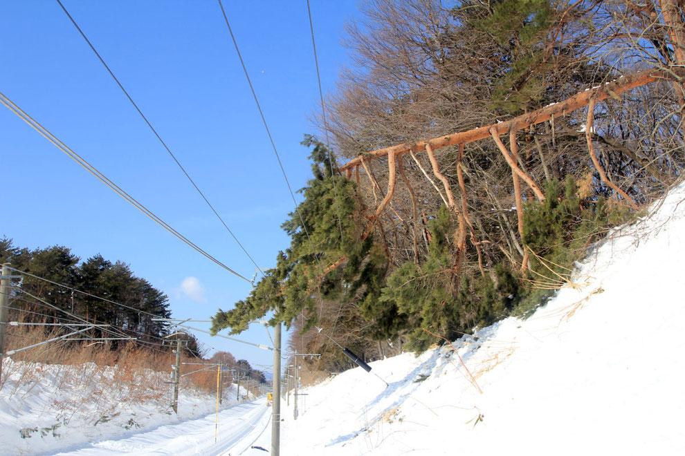 特殊伐採・緊急出動事例(JR中央本線|長野県富士見町)ウッドタワー工法にて施工