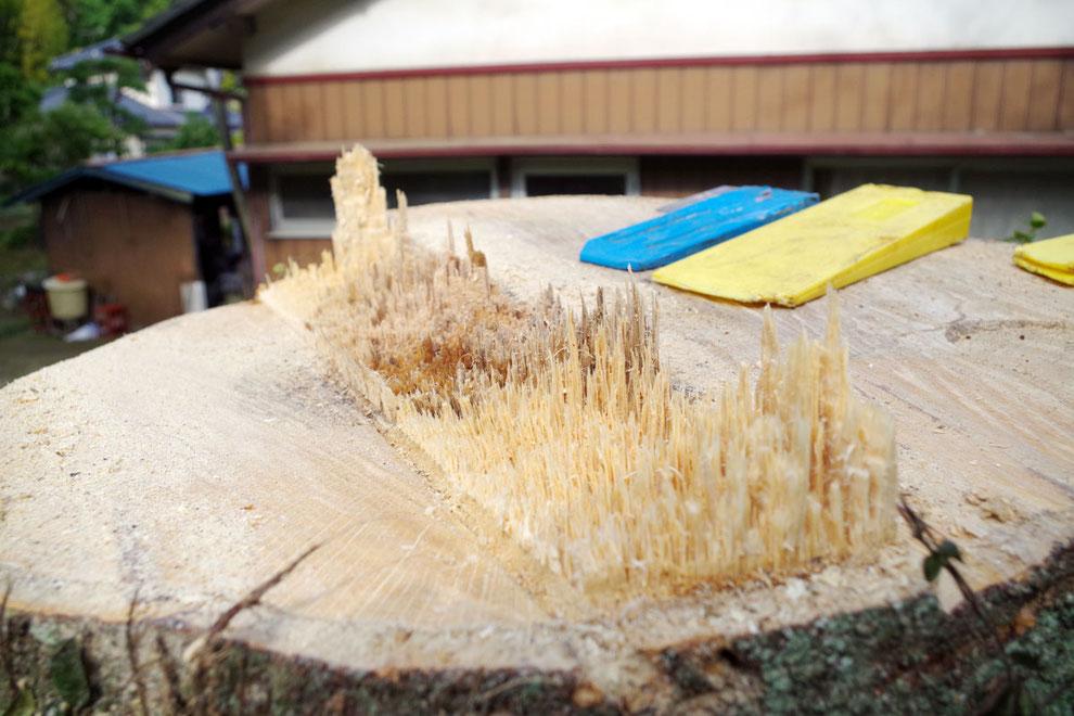 特殊伐採事例(U様庭|茨城県北茨城市)ウッドタワー工法にて施工