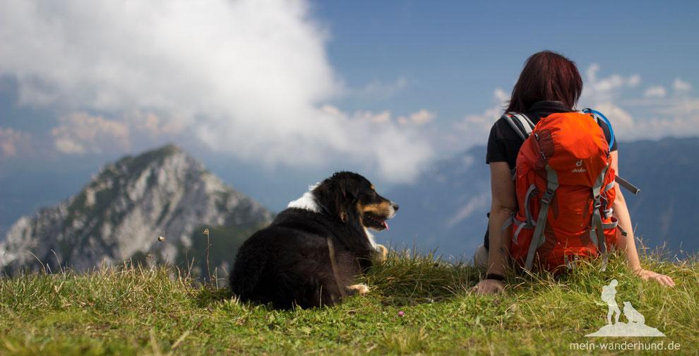 Wandern mit Hund; mein Wanderhund Ari; Andrea Obele