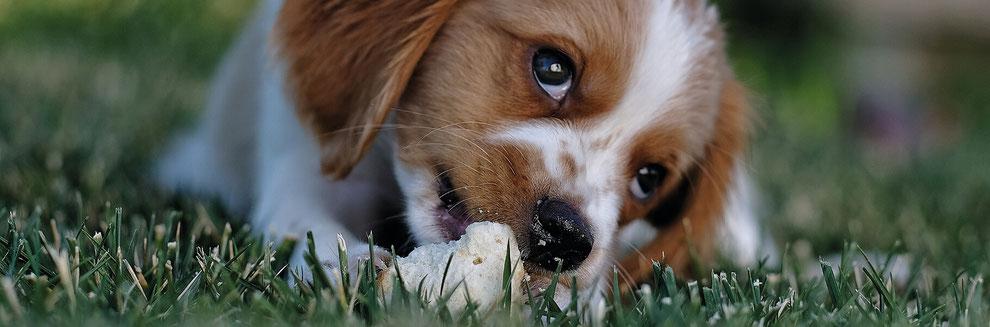 Hund hat Meisenknödel gefressen was tun