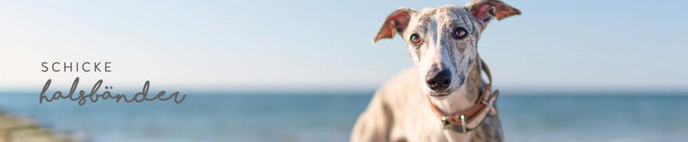 hundsoadli Halsbänder modern