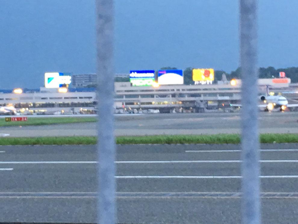 福岡手乗りインコ小鳥販売店ペットミッキン 福岡市の福岡空港にインコのお迎えに行ってきました。