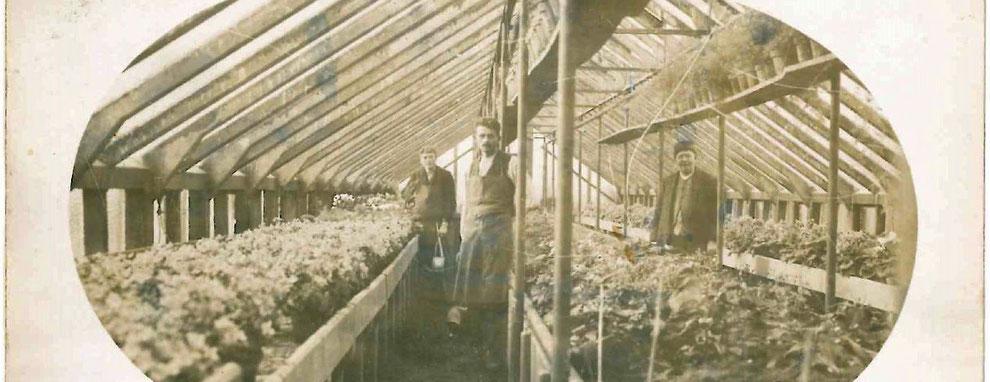 August Frank in seiner Gärtnerei