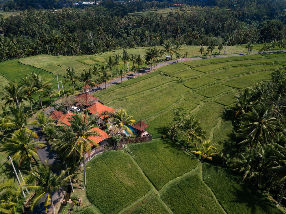 bali land for sale or lease ricefield view build villa