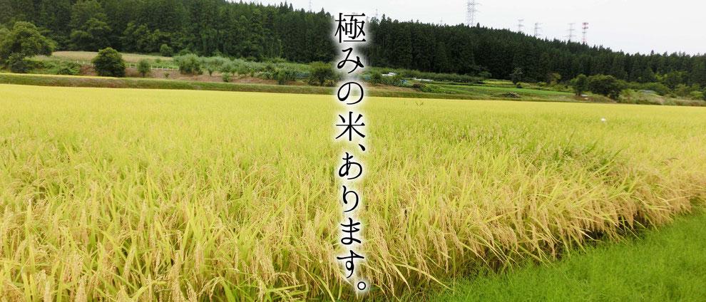 青森県産の米、あさゆきとつがるロマンを栽培