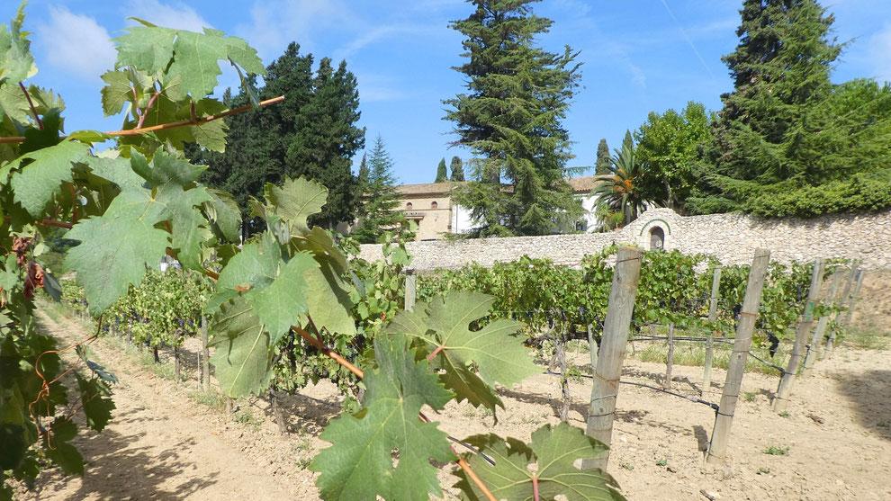 Tour de Bodegas y viñedos