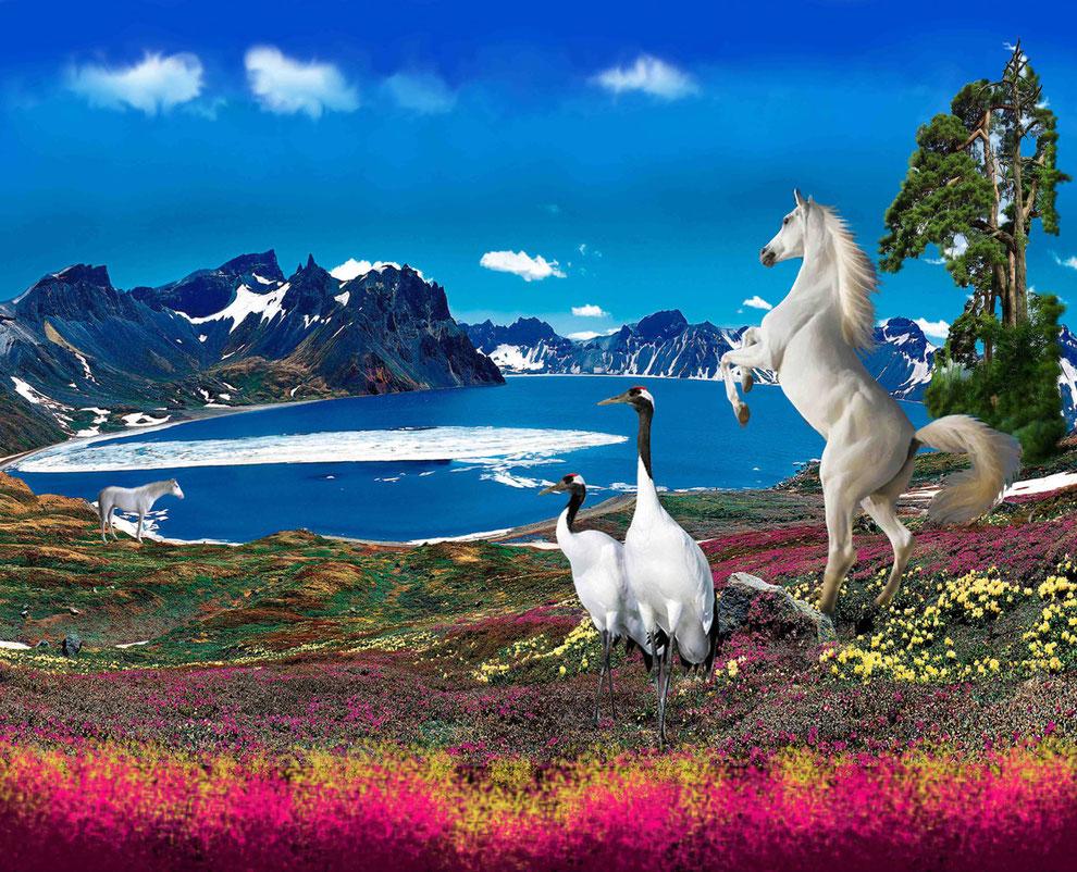 白頭山天池の香木。白い馬。タンチョウ
