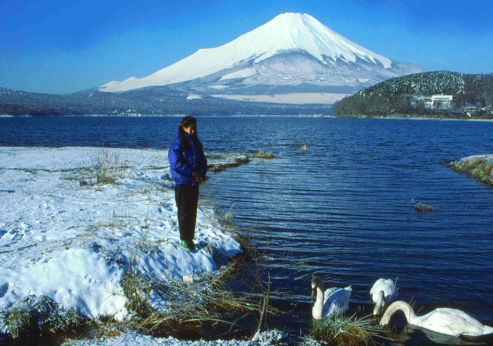 1 .   富士山 山中湖 大白鳥