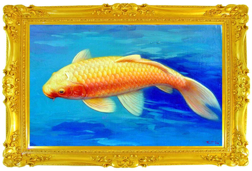 Nishikigoi   .    金錦鯉