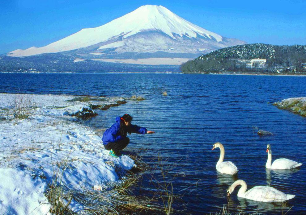 3  .   富士山 山中湖 大白鳥