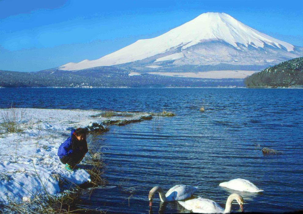 5  .   富士山 山中湖 大白鳥