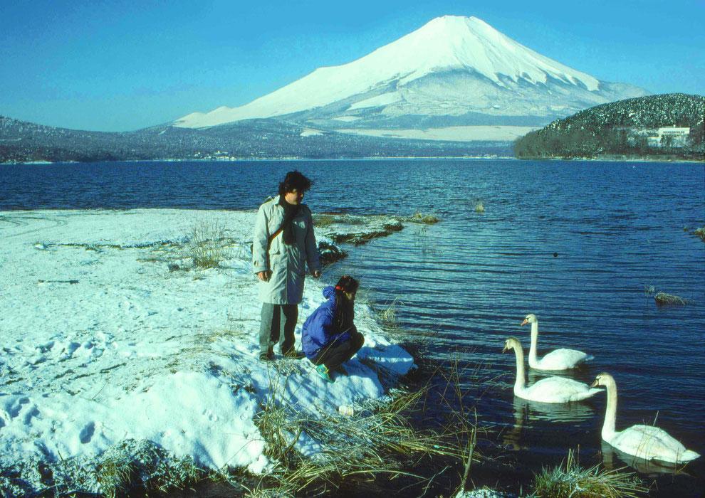11  .   富士山 山中湖 大白鳥