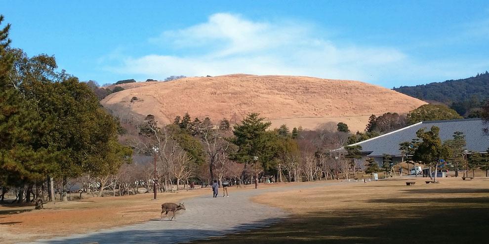 奈良公園若草山(伝統行事「若草山焼き」)と神鹿 京都観光タクシー 英語通訳ガイド永田信明
