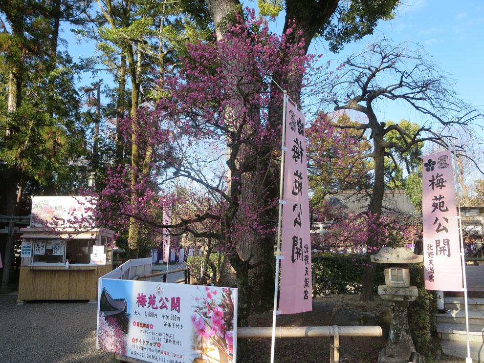 北野さんの梅香る季節 京都観光タクシー英会話ドライバー 永田信明