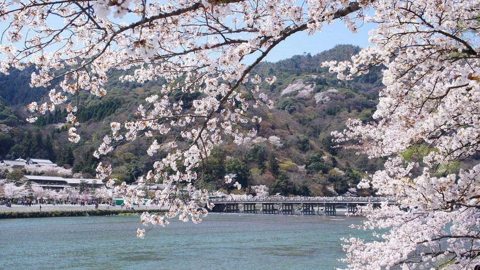 Sakura, Kyoto
