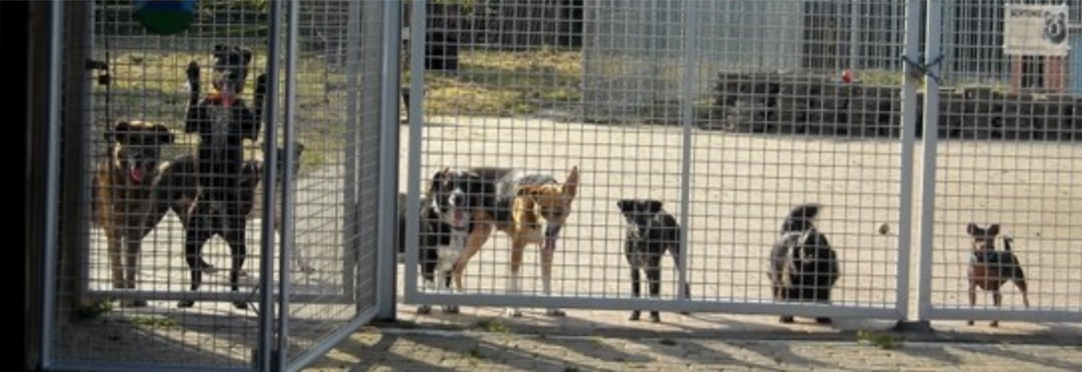 Tierheim Lindern Begrüßung am Zaun