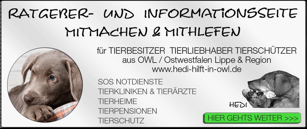 TIERKLINIK BIELEFELD TIERKLINIKEN NOTDIENST TIERÄRZTE TIERNOTDIENST TIEROPERATION OWL OSTWESTFALEN LIPPE TIERHILFE TIERSCHUTZ TIERHEIME 10