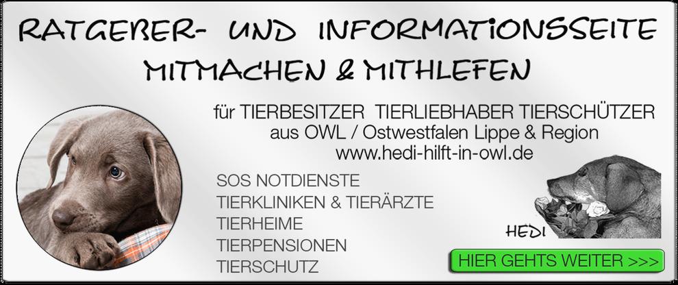 p10 TIERKLINIK BIELEFELD TIERKLINIKEN TIERÄRZTE TIERARZT NOTDIENST TIERNOTDIENST TIEROPERATION TIERNOTFALL OWL OSTWESTFALEN LIPPE TIERSCHUTZ TIERHILFE