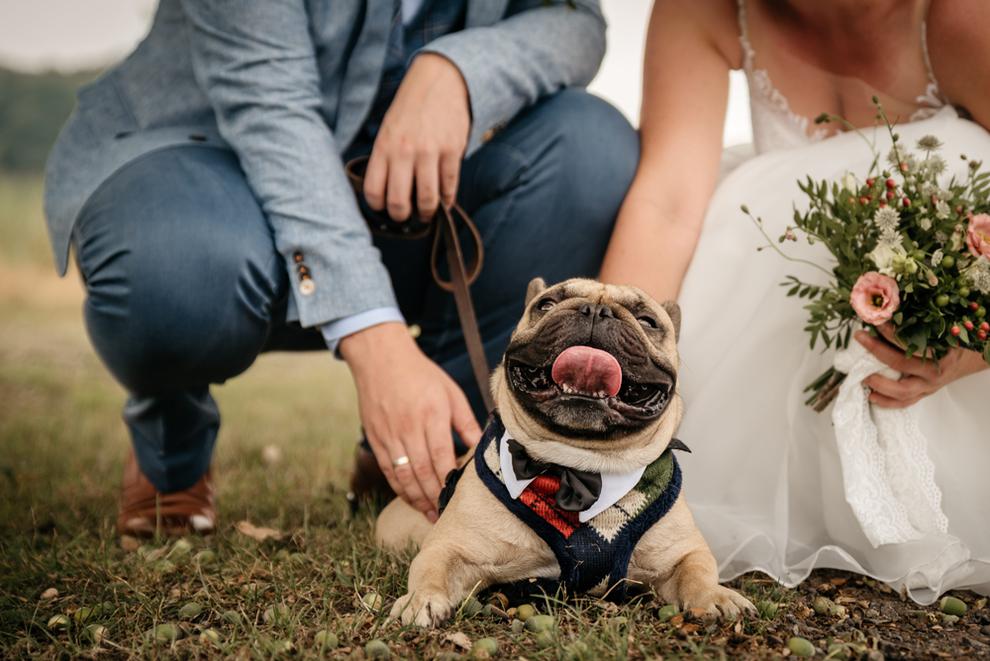wedding-huwelijksfotograaf-fotoshoot-frenchie-hond-©fotografils