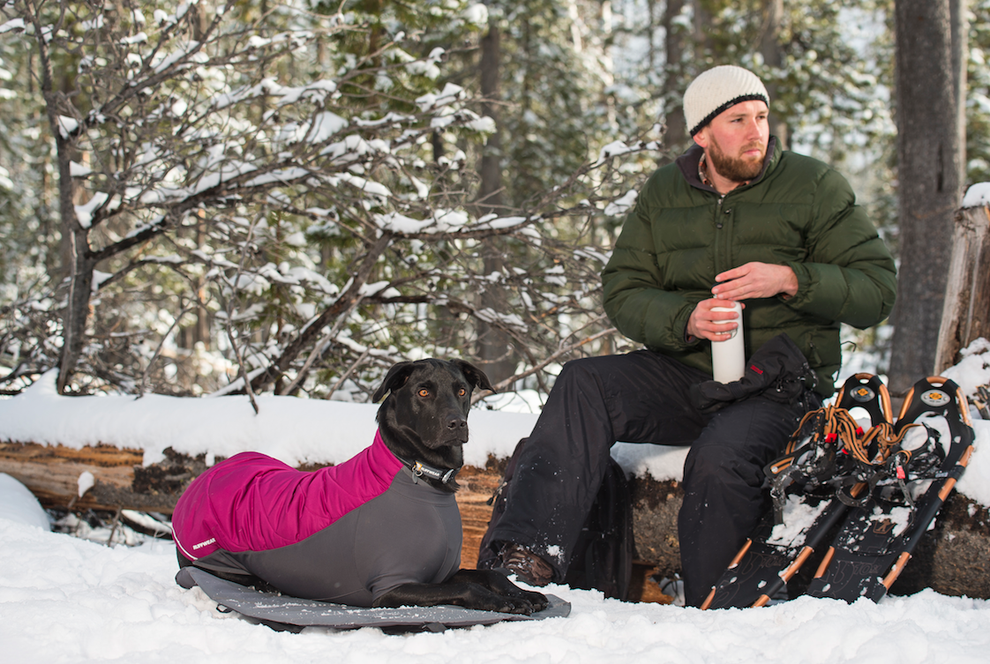 Wanderung Schnee Hund Schneeschuhwanderung