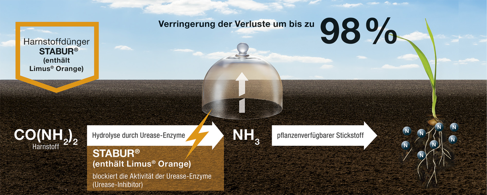 Wirkung Limus Orange Stabur N stabilisierter Harnstoff