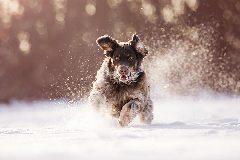 Hundefotograf Tierfotograf Tierfotografie Hundefotografie Fotoshooting eigenen Hund fotografieren fotoshooting Fotostudio Tiershooting Tierbilder lörrach Rheinfelden Basel Freiburg Weil am Rhein Bad Säckingen Bern Möhlin Riehen Waldshut Tiengen