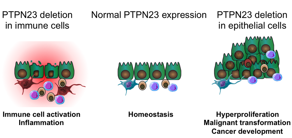 The role of PTPN23 in the development of colorectal cancer