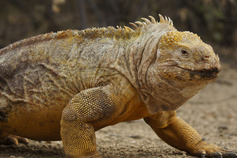 Kreuzfahrten auf den Galápagos Inseln ermöglichen Einblicke in die einzigartige Tierwelt