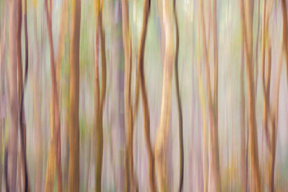 Berkenbos in beweging © Jurjen Veerman