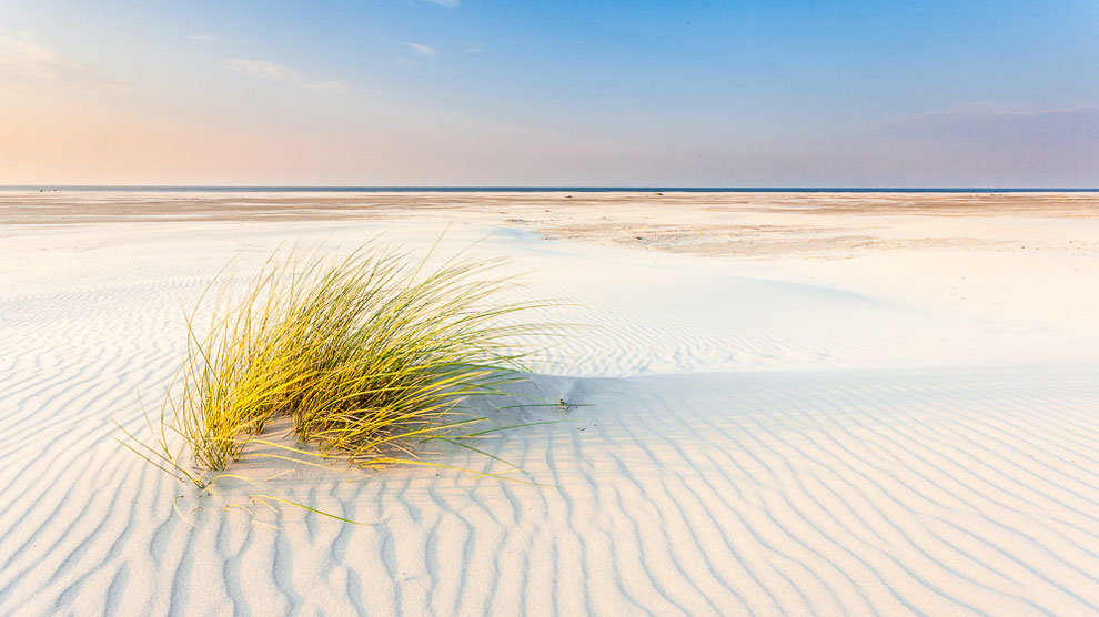 Helmgras strand Formerum - Terschelling