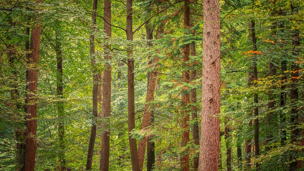Herfst boswachterij Gieten © JurjenVeerman