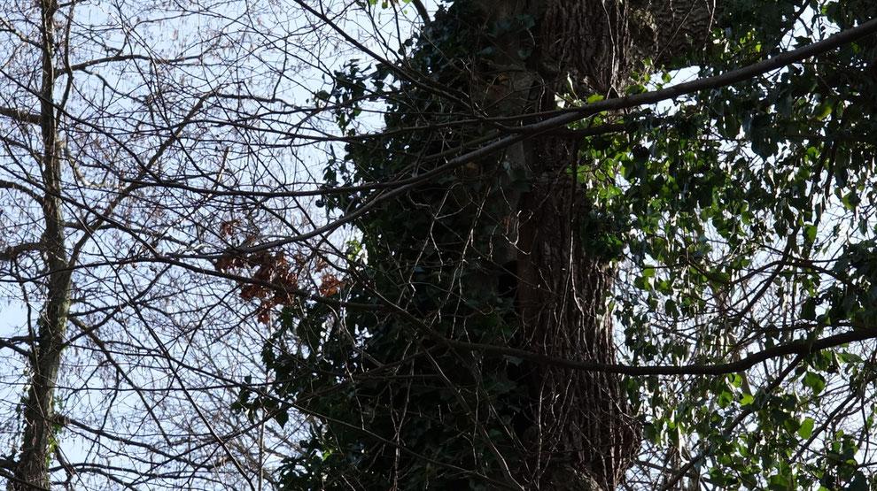 Hier könnt ihr den Baum noch besser sehen.