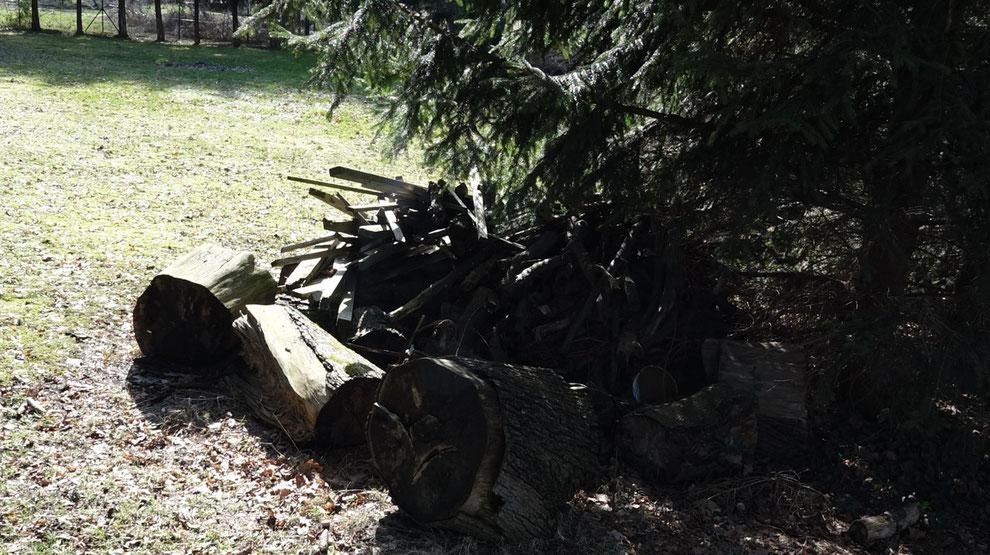 Unter diesem Holzhaufen könnte sich z.B. ein Igel verstecken.