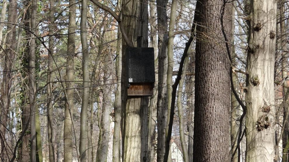 Wenn die Fledermäuse keine hohlen Bäume oder Höhlen finden, dann nutzen sie auch gerne die vom Menschen gebauten Unterschlupfe.
