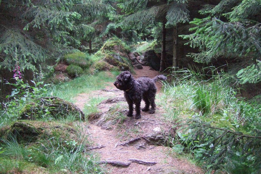 Wandern wie im Märchenwald - Briloner Kammweg - 70 min. Fußweg
