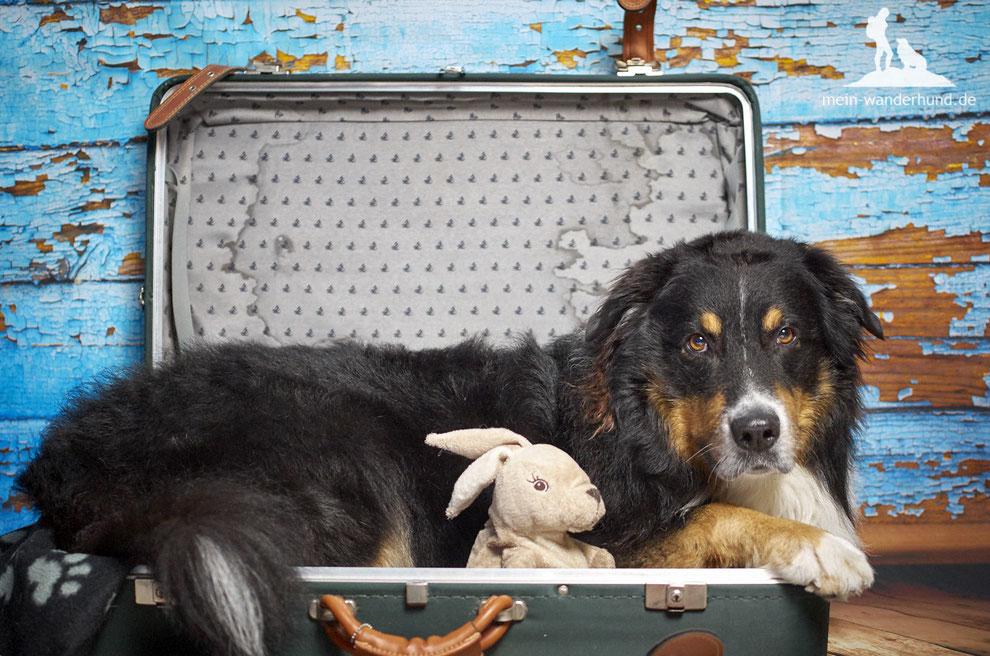 mein-wanderhund; Ari; Urlaub mit Hund;