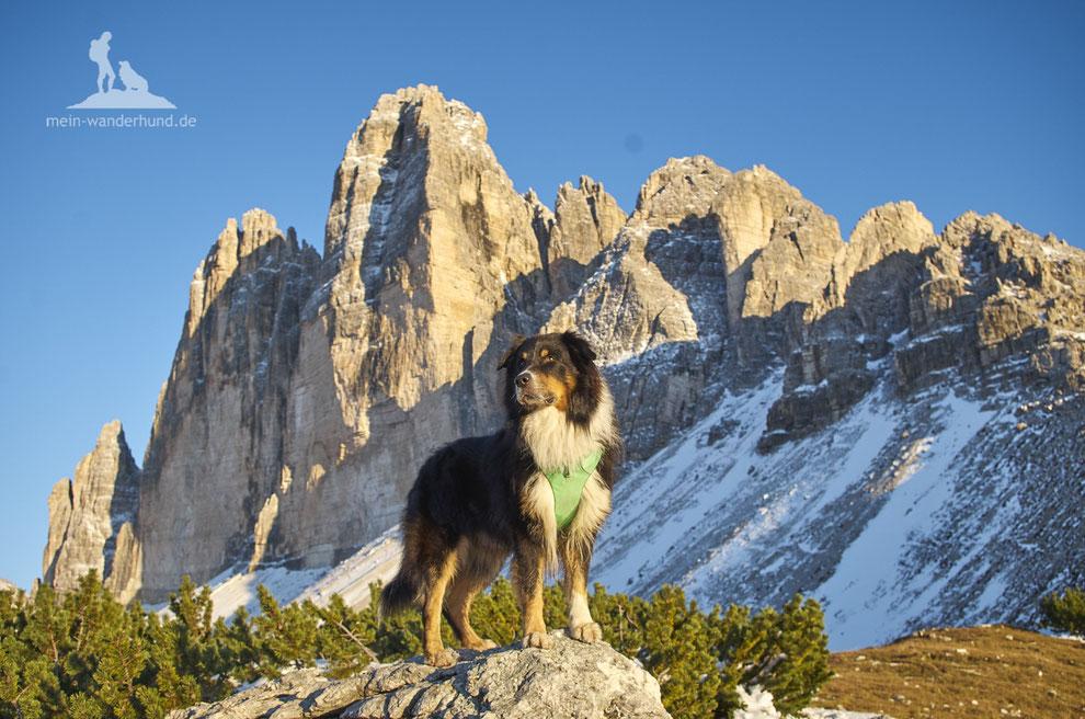 Wandern mit Hund, mein Wanderhund Ari, Andrea Obele, geschirr zum wandern mit hund; hundegeschirr