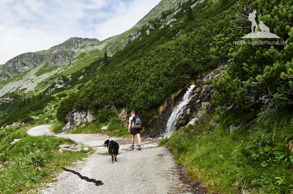 Wandern mit Hund, mein Wanderhund Ari, Andrea Obele, Schlange